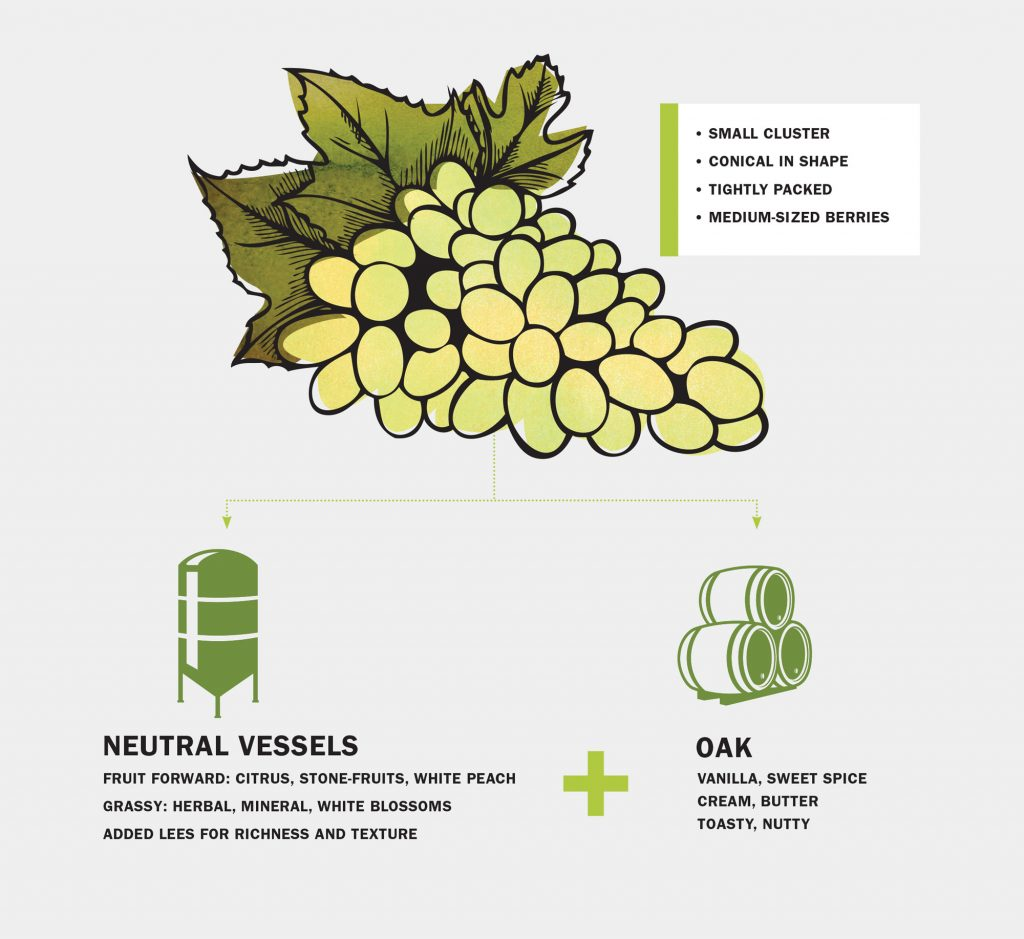 sauvignon blanc infographic